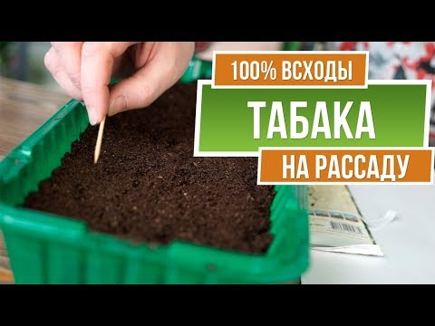 Как правильно посадить табак ✔️