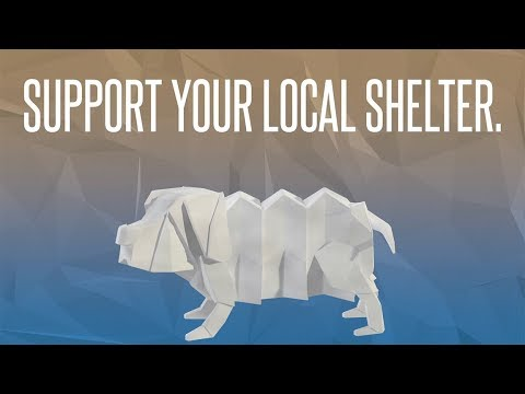 Video: Kingsport Animal Shelter, April 26