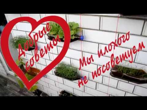 Мини огород на балконе из полторашек своими руками