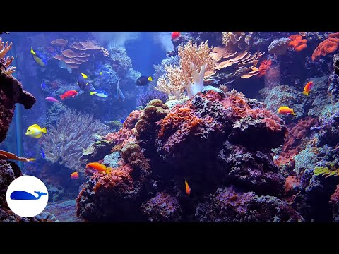 Download CORAL REEF AQUARIUM | NO MUSIC 8 HOURS | RELAXING 🐠FISH TANK #RELAXTIME Mp4 HD Video and MP3