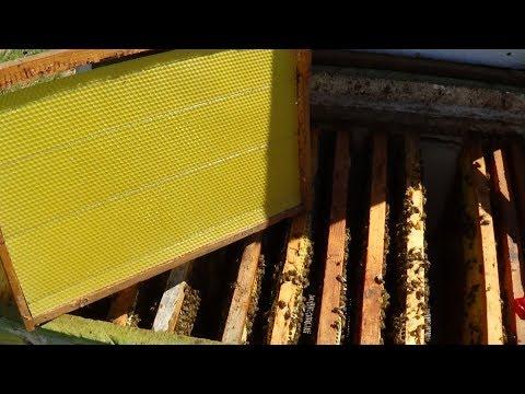 Вощина + сушка + пчела = расширению пасики
