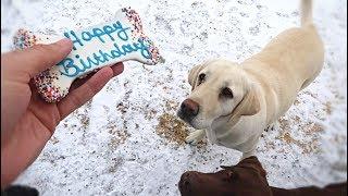 Chief's 3rd Birthday!!