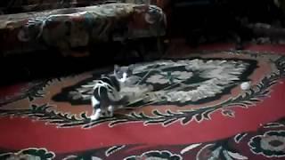 кот доигрался