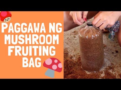 Paano ay isang dugo pagsubok para sa mga worm