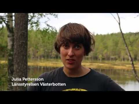 Film: Julia arbetar på länsstyrelsen
