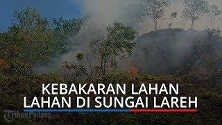Kebakaran Lahan di Sungai Lareh Lubuk Minturun Kota Padang