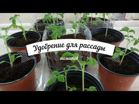 Нитроаммофоска - удобрение/подкормка для рассады томатов. Чем подкормить рассаду томатов?