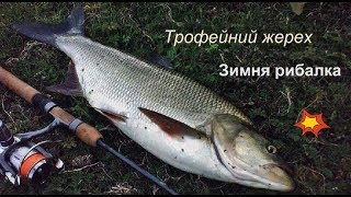 Ловля трофейного жереха. Зимня рибалка. Рыбалка на трофейного жереха.