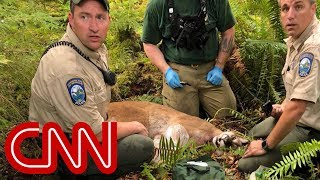 Cougar kills cyclist, mauls another in rare attack - Video Youtube