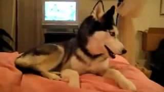"""A dog barking """"I love you""""))))))))))))))"""