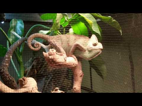 The long awaited DFQ Full House Tour!!!(Poison Dart Frog room, Madagascar reptile room, and more!!!)