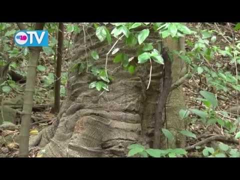 """Chocoyero """"El Brujo"""", un espacio para conectarse con la naturaleza"""