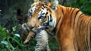wildlife documentary - Wild Thailand A Land of Beauty - Discovery channel animals - Animal planet