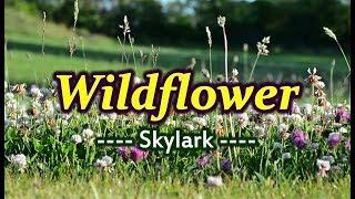Wildflower   Skylark (KARAOKE VERSION)