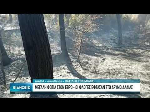 Δεύτερη ημέρα κατακαίει η φωτιά στη Δαδιά ¨Εβρου | 02/10/20 | ΕΡΤ