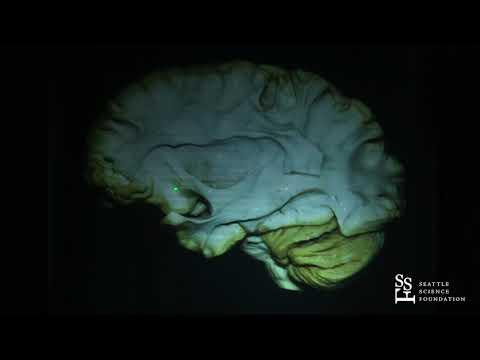 Anatomia mózgowia częsć 2