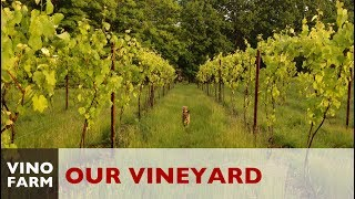 Our Vineyard Story - A Dream Meets Reality
