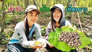 ค้นหาวิถีชนเผ่า EP.22 สาวปกาเกอะญอพาเก็บเห็ดเผาะบนยอดดอยในป่าท่ามกลางสายฝน