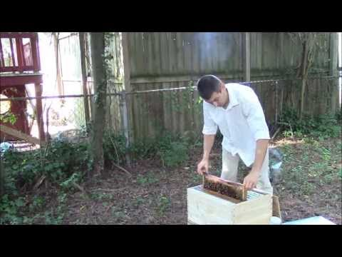 , title : 'Best way to start beekeeping - established hive with bees