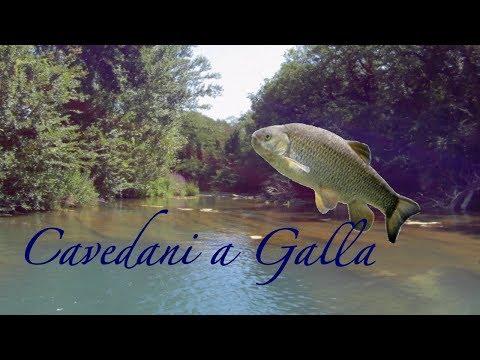 La pesca su un occhio per comprare