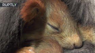Чужих детей не бывает: в Крыму кошка усыновила бельчат