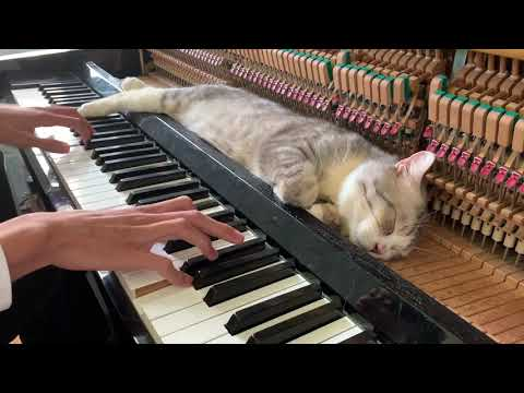 Lullaby for a cat