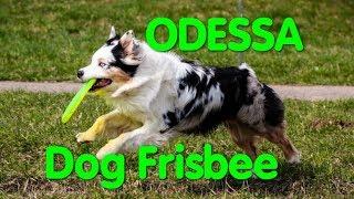 Dog Frisbee Odessa. Ролл дальность. Дог Фрисби (Фризби). Одесса. Чемпионат. Собаководы. VLOG DOG.
