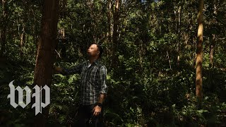 Planting trees to fight climate change in one of the most deforested countries on the planet