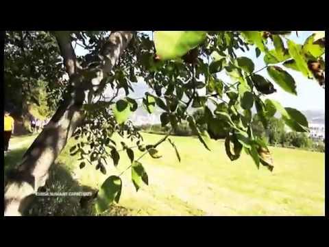Watch videoSíndrome de Down: Cursa ''Sumant Capacitats''
