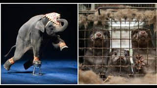 France to ban use of animals in traveling circuses, breeding orcas and dolphins, and mink fur