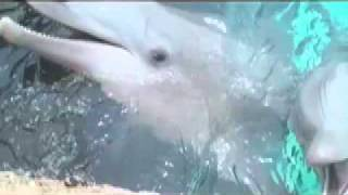 Dolphin wants to bite hand off