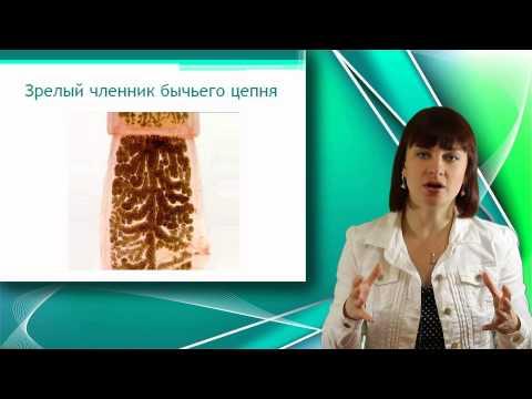 Препараты от гельминтов для человека широкого спектра действия