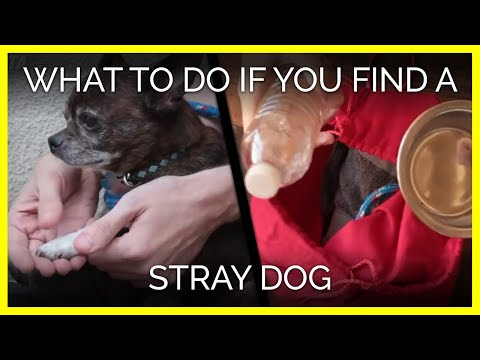 What to do if you find a stray dog or cat