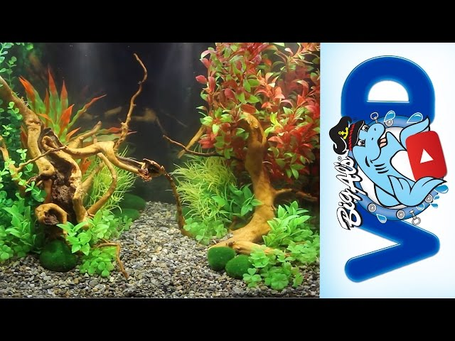 How to use Fake Aquarium Plants to Create Stunning Natural Aquascapes | Big Al's