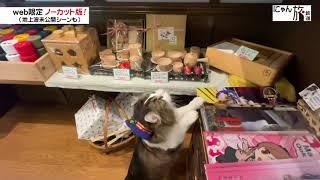 Vol.114「にゃん旅鉄道」七日町駅に来たにゃ!