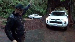 Redwood Drive Thru Tree