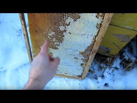 Пчеловодство. Проверка слабышей. Анализирую ситуацию. Подлаживаю рамку мёда семейке.