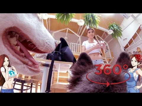 A Husky Tried To Eat My Insta360 Camera!