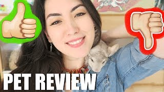 CHINCHILLAS | THE RIGHT PET FOR YOU? | PET REVIEW