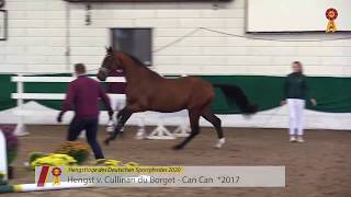 video of Hengst von Cullinan du Borget / Can Can