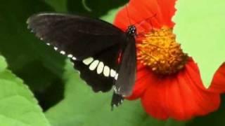 Butterflies (alternate version) - Juliana Hatfield