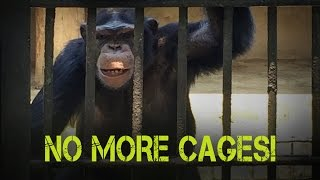 NO MORE CAGES: DEHIWALA ZOO EXPOSED
