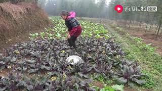 农村四哥:王四跟英子不在家,老妈忙里忙外,还做了一盘美食