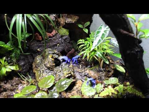 Home Vivarium/Terrarium dart frog jungle!