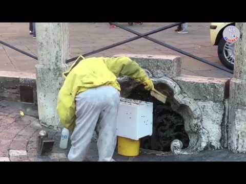 Siena: sciame di api in Piazza del Campo, interviene l'apicoltore