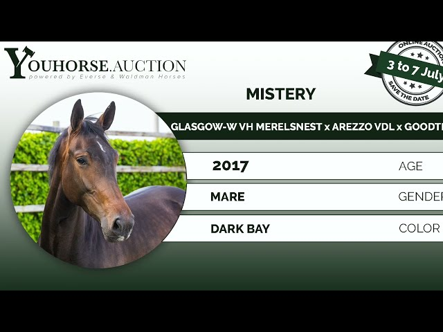 Mistery under the saddle