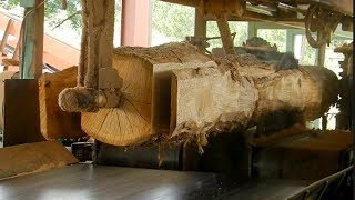 Extreme Fastest Automatic Wood Sawmill Machines Working   Wood Cutting Machine Modern Technology