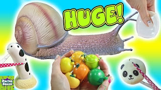 Cutting Open Huge Squishy Snail Toy! Snail Slime! Homemade Squeeze Toy Doctor Squish