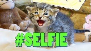 #SELFIE (Official Cat Music Video) - The Chainsmokers PARODY #LOLCAT