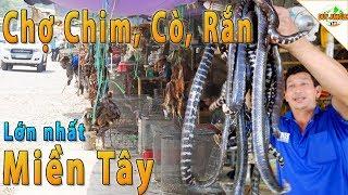Thạnh Hóa Long An -  Chợ Chim, Cò, Chuột, Rắn Lớn Nhất Miền Tây   Duy Jungle